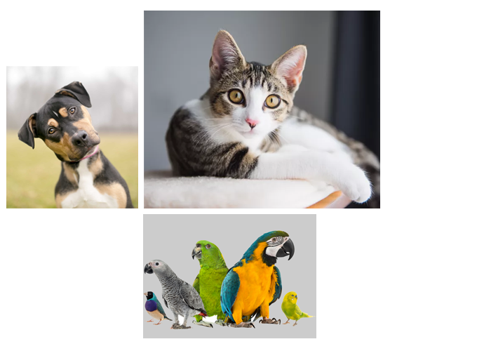 Collage of a cat, dog, and birds